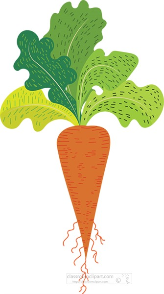 carrot with leaves and roots clipart.jpg