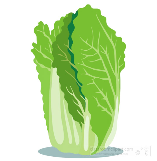 chinese-cabbage-clipart-image.jpg