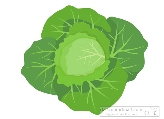 head-of-cabbage-clipart-318.jpg