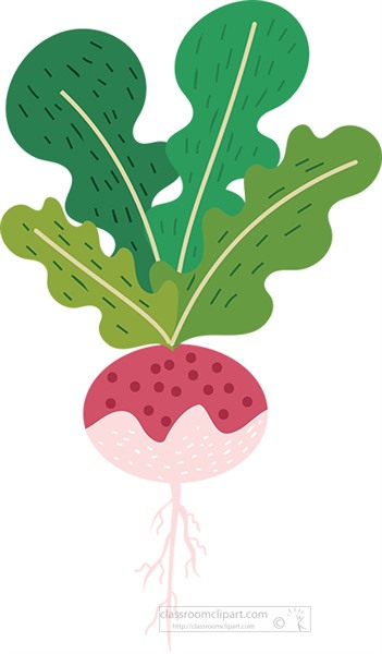 turnup plant illustrated clipart.jpg