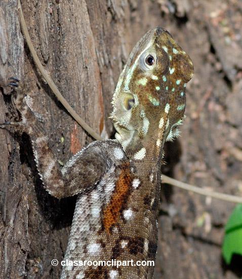 5_africa_lizard7.jpg