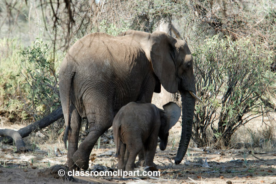 5_elephants01.jpg