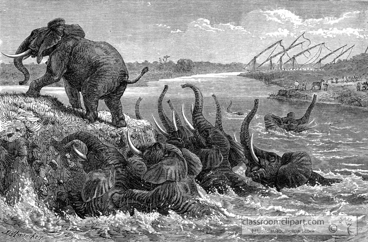african-elephants-hunted-in-the-water-historical-illustration-africa.jpg