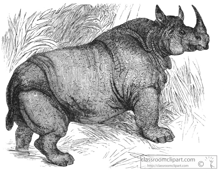 rhinoceros-001-historical-illustration-africa.jpg
