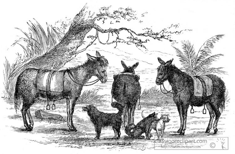 saddledonkeys-in-africa-historical-illustration-africa.jpg