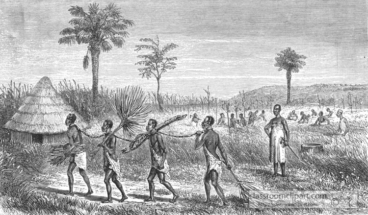 slaves-carrying-fuel-and-cutting-rice-historical-illustration-africa.jpg