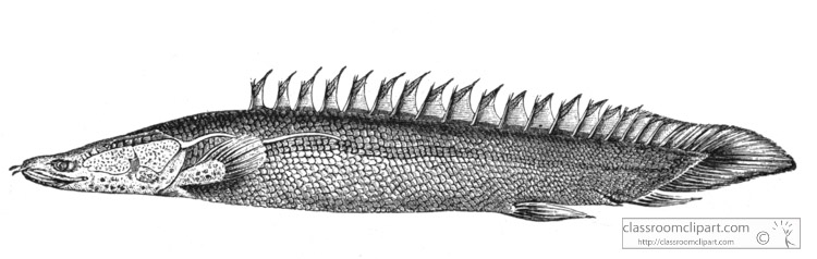 young-polypterus-historical-illustration-africa.jpg
