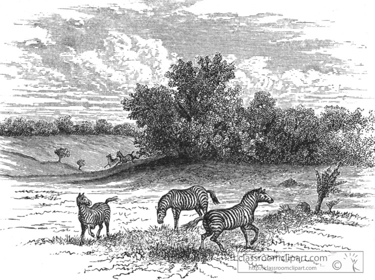 zebra-at-home-in-africa-historical-illustration-africa.jpg