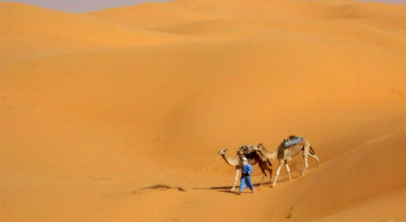photo-camels-in-the-desert-algeria.jpg