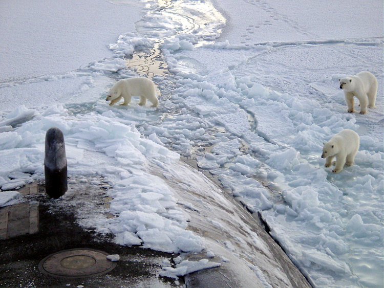 three-polar-bears-approach-submarine-in-arctic-circle-photo.jpg