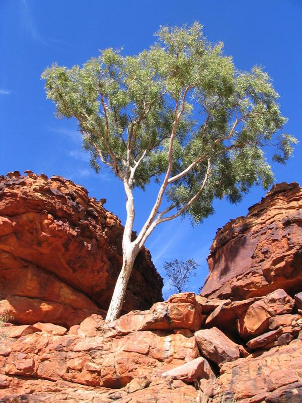 australia_114.jpg