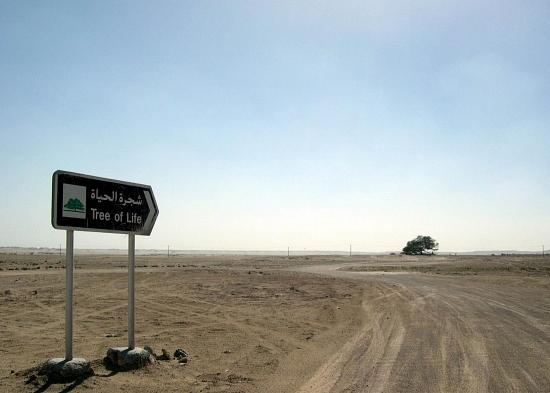 Bahrain_11.jpg