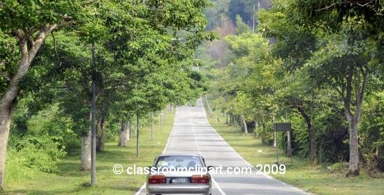 Borneo_1247a.jpg