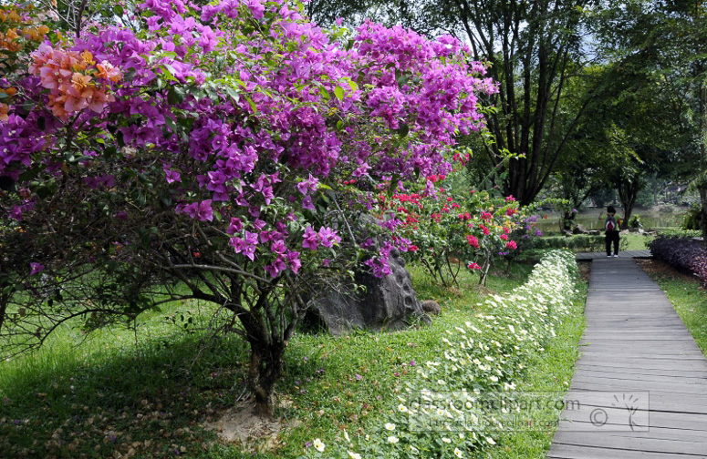 Borneo_1256a.jpg