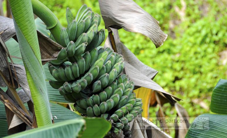 Borneo_1327a.jpg