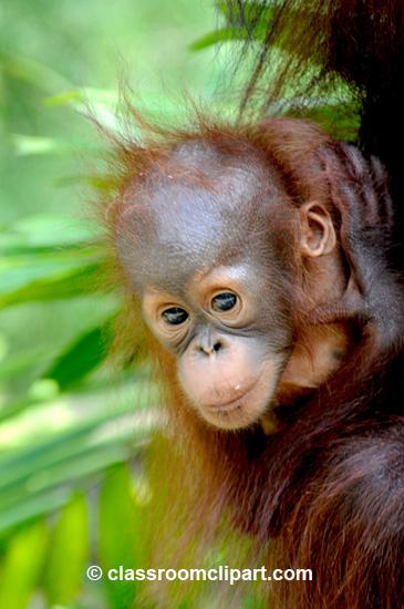 Borneo_1626A.jpg