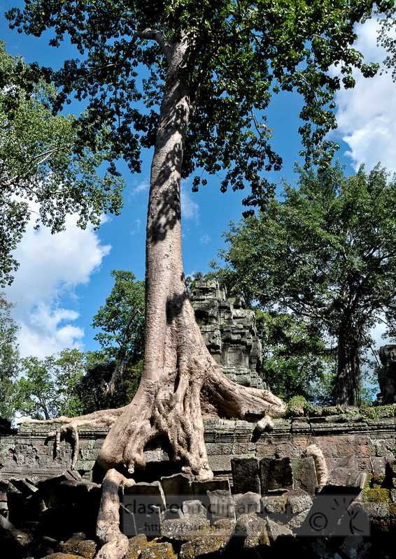 Photo-Angor-Wat-Cambodia-39.jpg