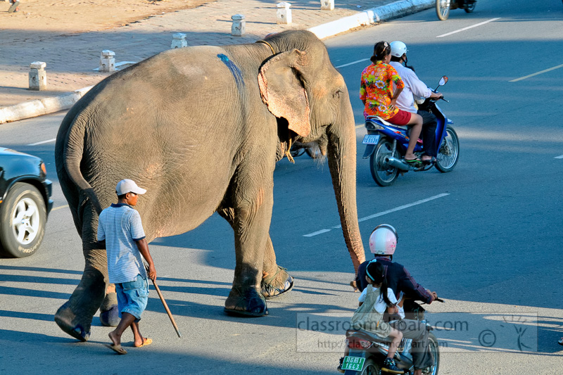 large-elephant-walking-in-the-street-phnom-penh-cambodia-photo-60.jpg