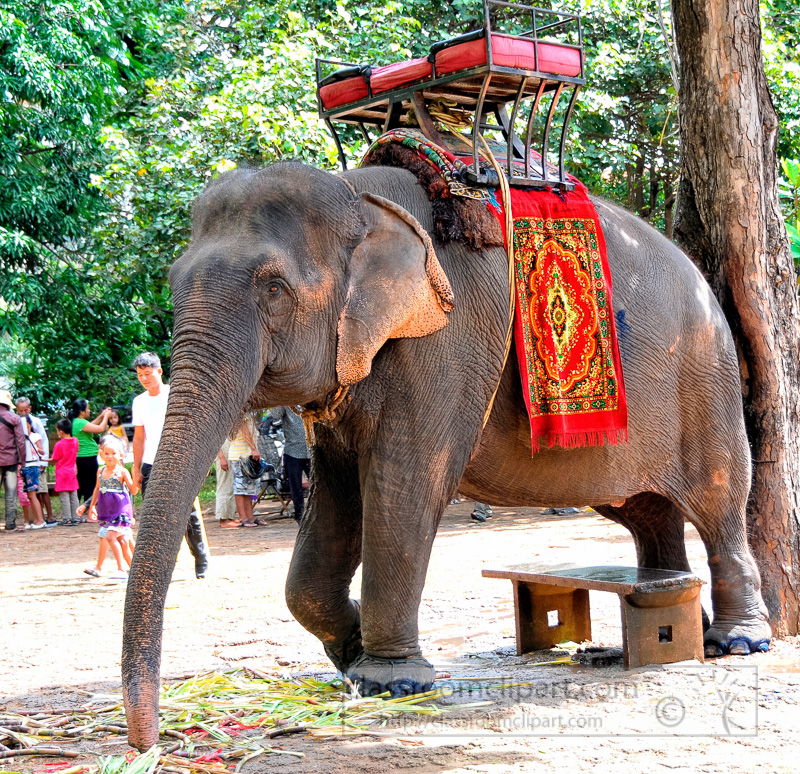 phnom-penh-elephant-Photo-37.jpg