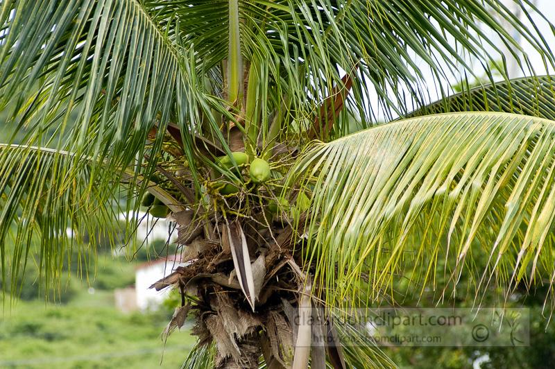 Photo-Palm-Tree-caribbean-0103-2.jpg