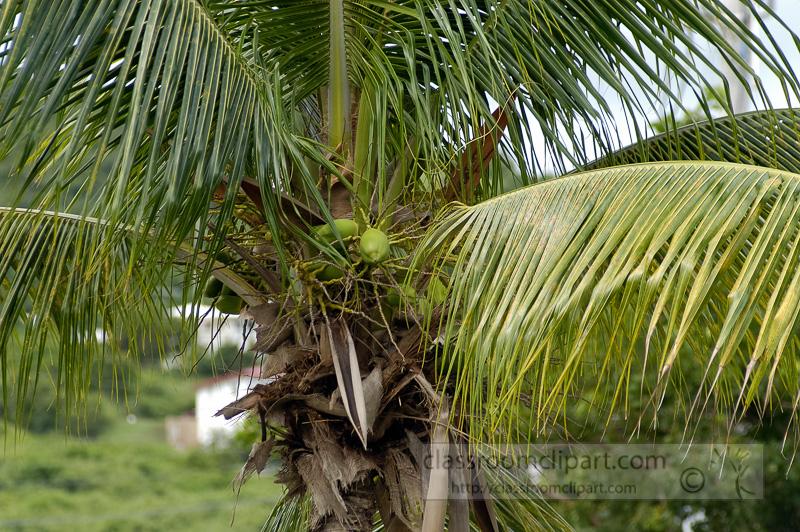 Photo-Palm-Tree-caribbean-0103.jpg