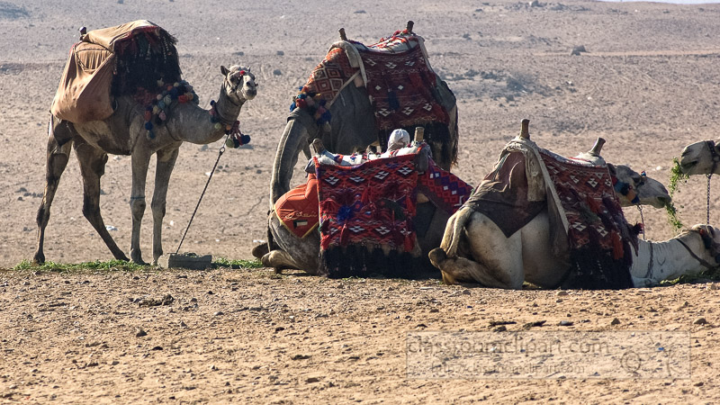 group-of-camels-near-pyramids-giza-egypt-photo_5363-ga.jpg