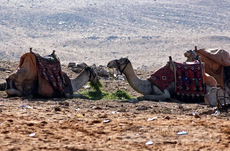 group-of-camels-near-pyramids-giza-egypt-photo_5375-ga.jpg