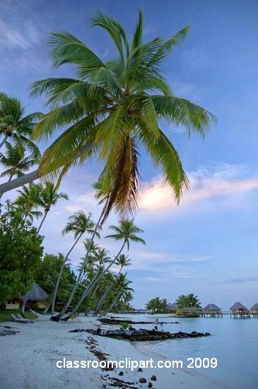 polynesia_7.jpg
