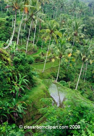 Bali_6922.jpg