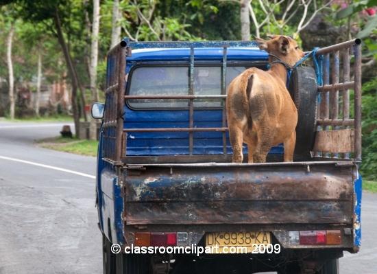 Bali_7226.jpg
