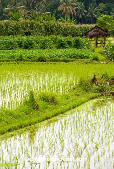 Bali_7643.jpg