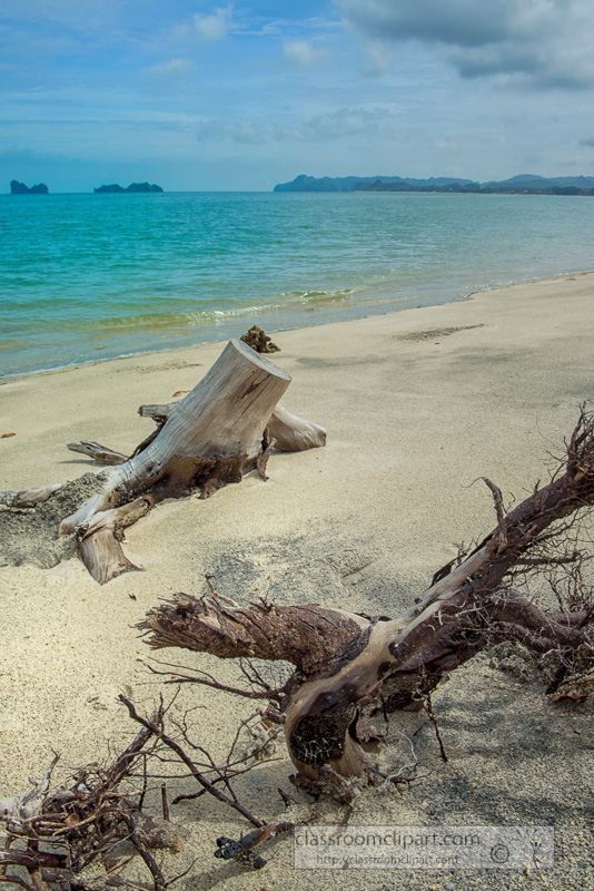 old-tree-on-beach-langkawi-malaysia-7092.jpg