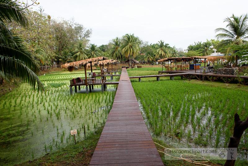 rice-paddies-langkawi-malaysia-7010.jpg