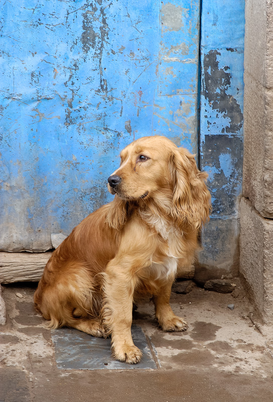 Dog-sitting-near-a-street-Cuzco-Peru_028.jpg