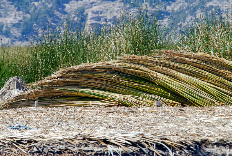 Piles-of-Reeds-stacked-on-Uros-Floating-Islands-Photo-32A.jpg