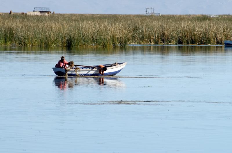 boat navigating through tortora reeds Photo-2419A.jpg