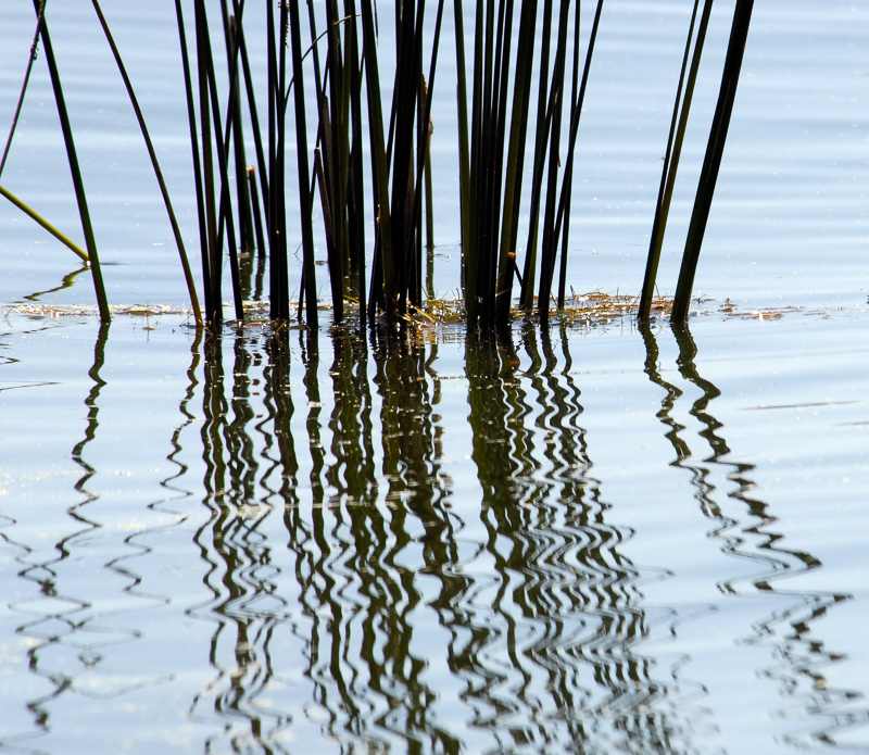 reflection-of-reeds-in-water-702A.jpg