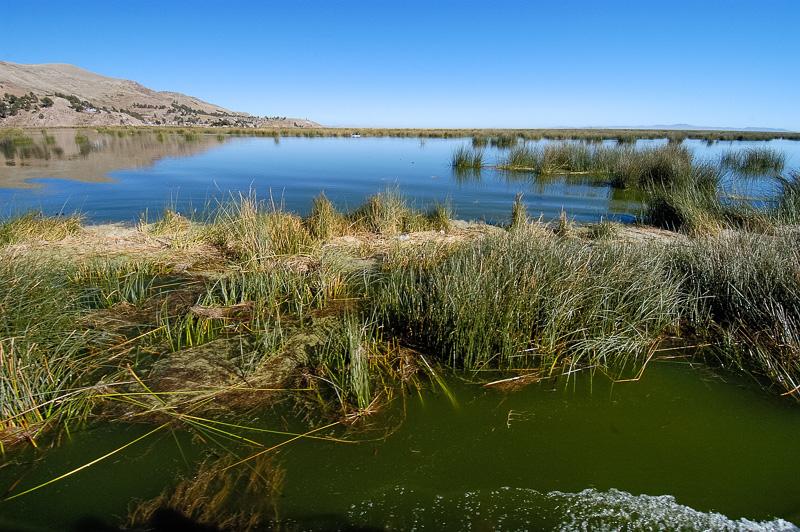 tortora-reeds-Lake-Titicaca-Photo-0017A.jpg