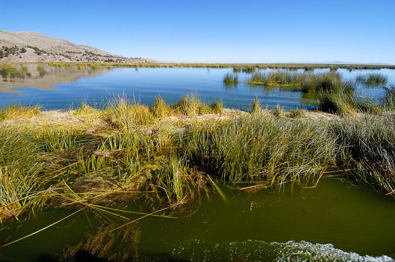 tortora-reeds-Lake-Titicaca-Photo-0017AAA.jpg
