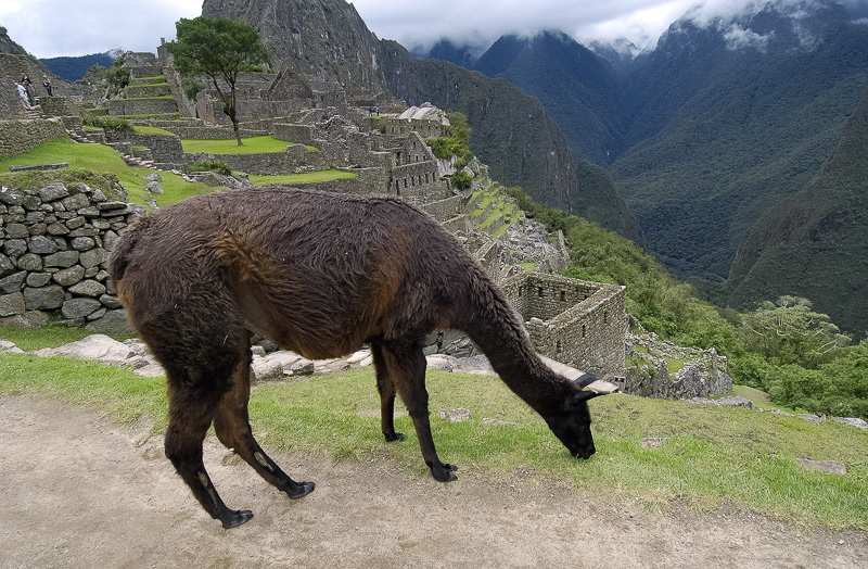 Inca-Ruins-Machu-Picchu-Peru_070.jpg