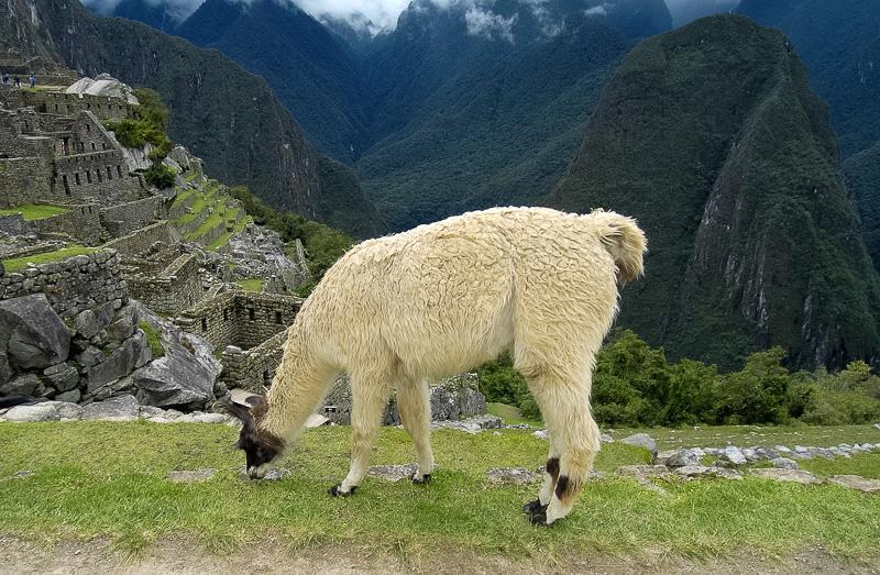 Inca-Ruins-Machu-Picchu-Peru_071-2.jpg