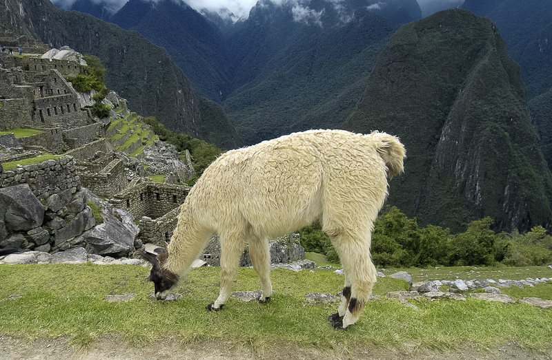 Inca-Ruins-Machu-Picchu-Peru_071.jpg