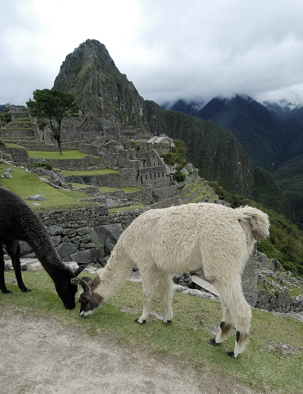 Inca-Ruins-Machu-Picchu-Peru_073.jpg