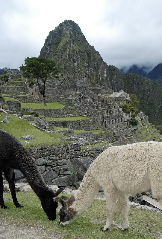 Inca-Ruins-Machu-Picchu-Peru_073c.jpg