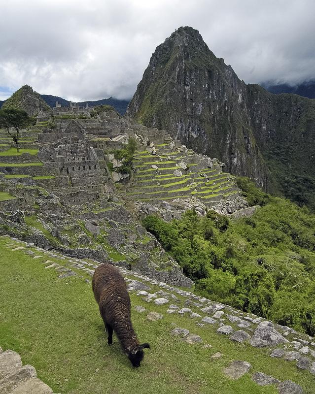 Inca-Ruins-Machu-Picchu-Peru_076c.jpg