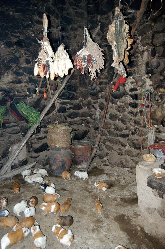 Interior-rock-adobe-style-home-Ollantaytambo-with-guinea-pigs-Peru-Photo_007.jpg