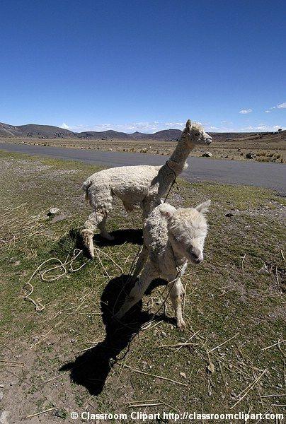 Peru_91_019.jpg
