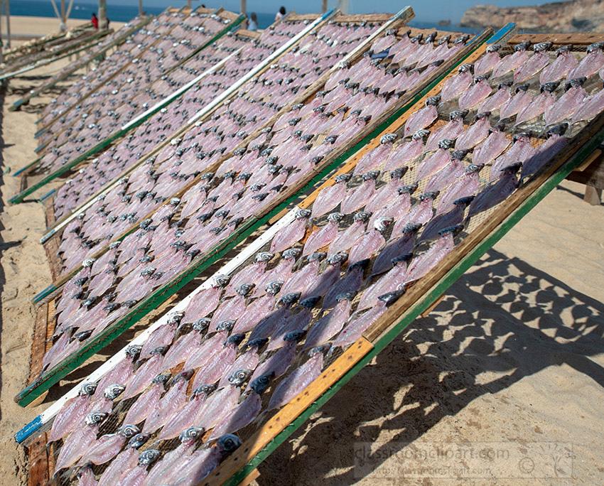fish-hanging-on-drying-racks-nazare-portugal_8504086.jpg