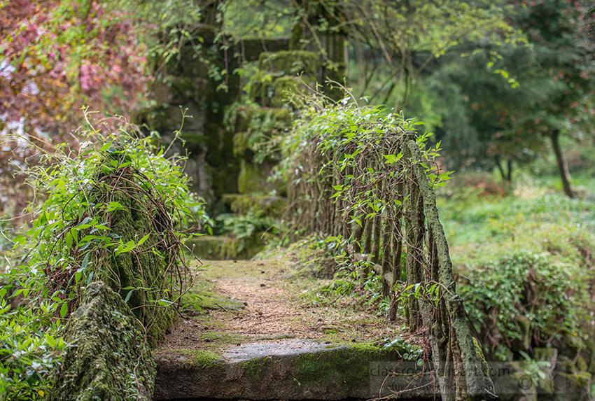 moss-cover-old-rustic-footbridge-718.jpg