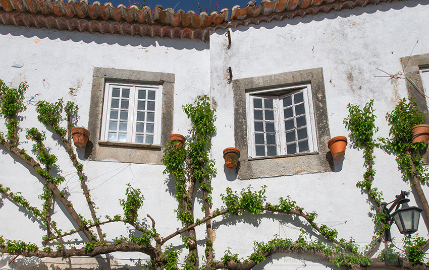 vines-on-exterior-white-washed-walls-home-obidos-portugal.jpg